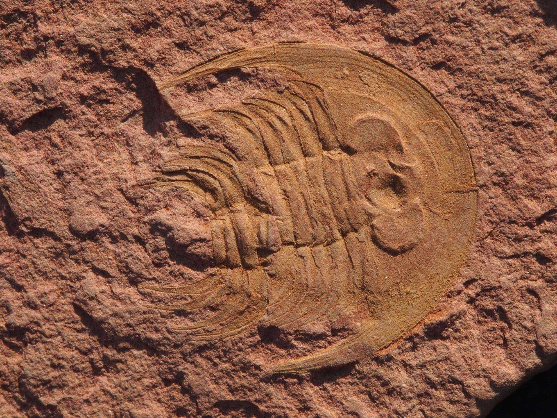 5cf00d32dec7b_Spinamacropygedaliensis2.thumb.jpg.99100bf381248d69c19c210e91cc5605.jpg