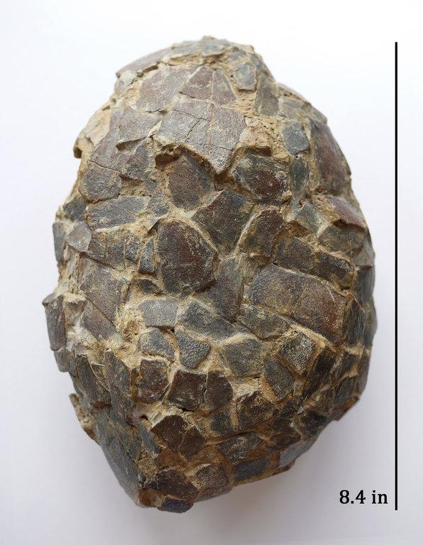 Cairanoolithus_1b.thumb.jpg.c6f3d9e64946aba1368c678dd5ca7937.jpg
