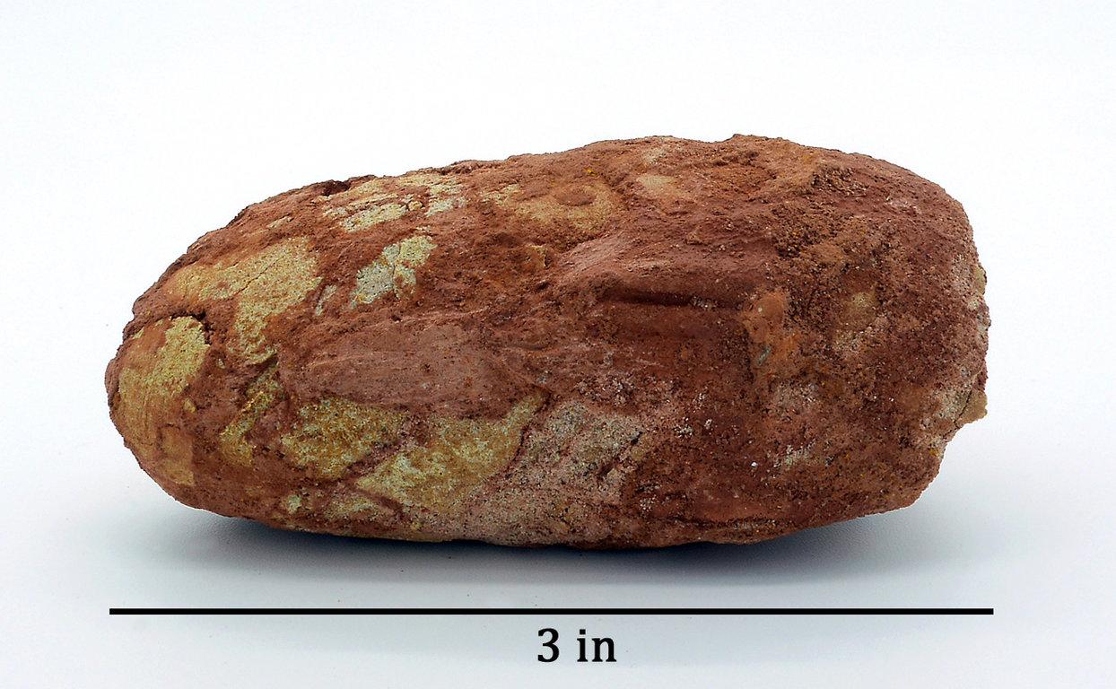 Egg_Troodon-1b.thumb.jpg.dd6e77a6046df2ffe8ae42e19f643a24.jpg