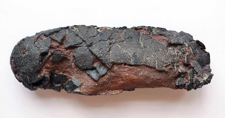 Oviraptor_4.thumb.jpg.c36e9efd43bf694a8e9c1bfe4cde8767.jpg