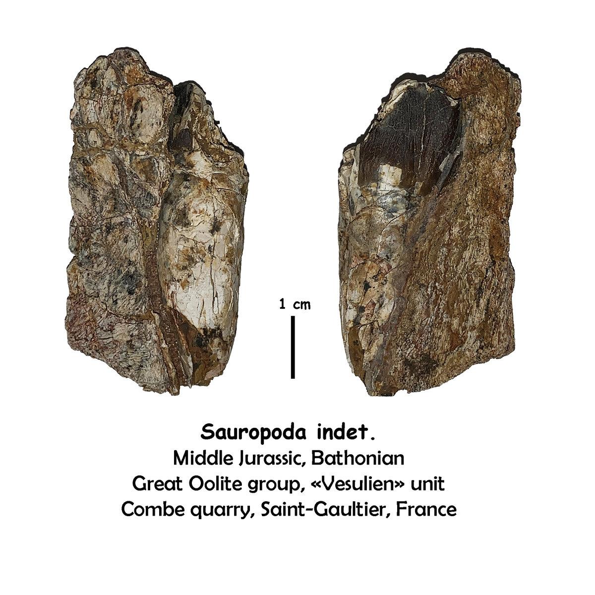 Jurassic sauropod from France