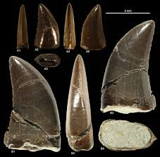 tooth123.jpg