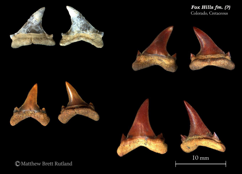 01_FoxHills_Cretaceous_012019.thumb.jpg.ba825add52819b8f4774aad6663bfb45.jpg