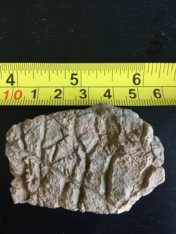 Fossil 3.jpg
