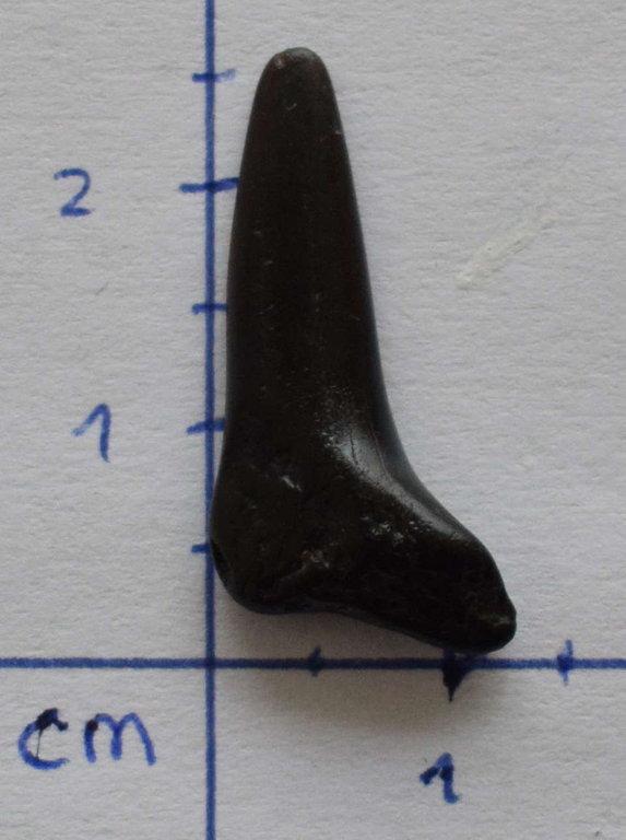 Tooth4.thumb.jpg.a6cbdaefc71d87cf2e49b31b2ec97473.jpg