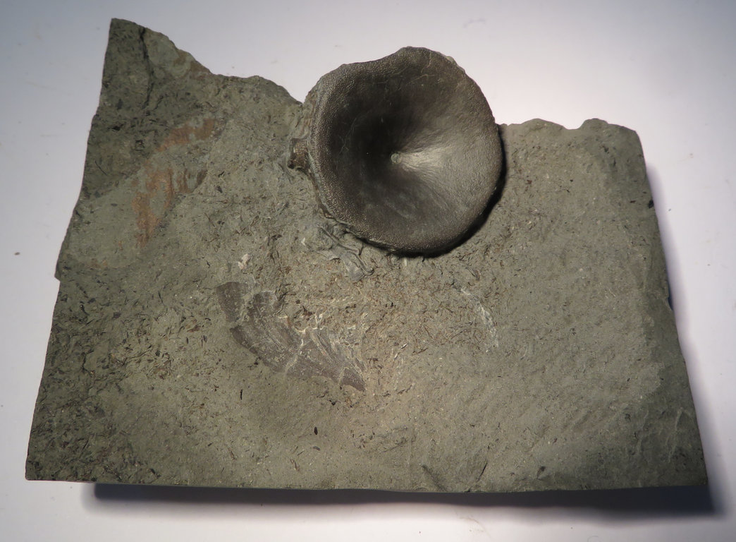 ichthyowirbel1.thumb.jpg.f06f6def4db10eb05ba9b90b45a42fe3.jpg