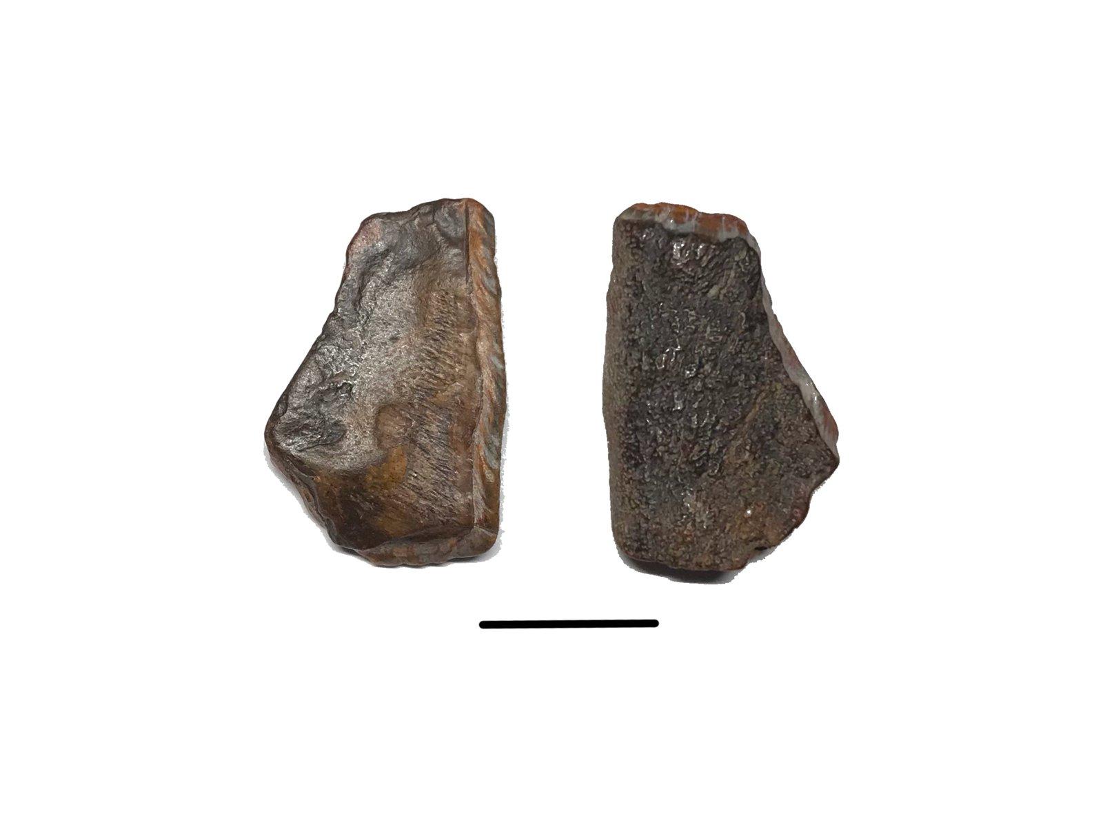 Mastodon tooth enamel