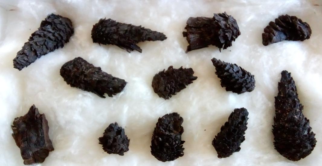 pinecones1.png