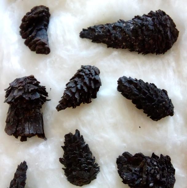 pinecones2.png