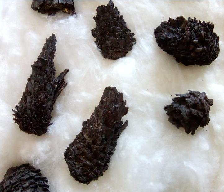 pinecones4.png