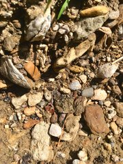 Can you find the shark tooth? (4)