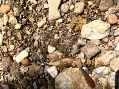 Can you find the shark tooth? (5)