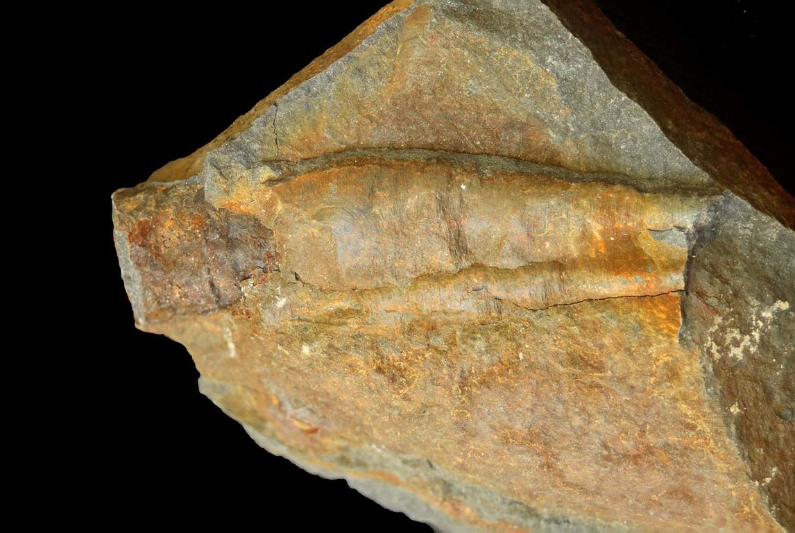 cephalopod1-sm.thumb.jpg.655a1db4ed00676b685d2e1ccc845dd9.jpg
