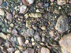 Can you find the shark tooth? (6)