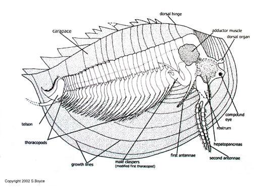 Arthropod.jpg
