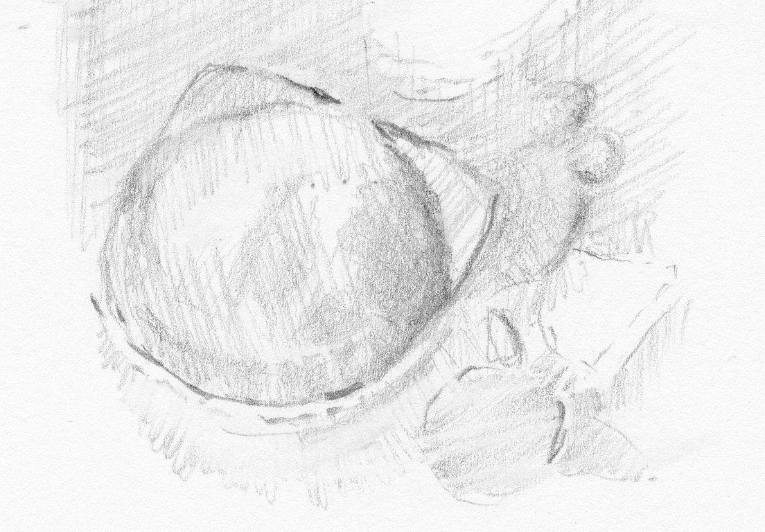 aFossilBrachiopod-1.jpg