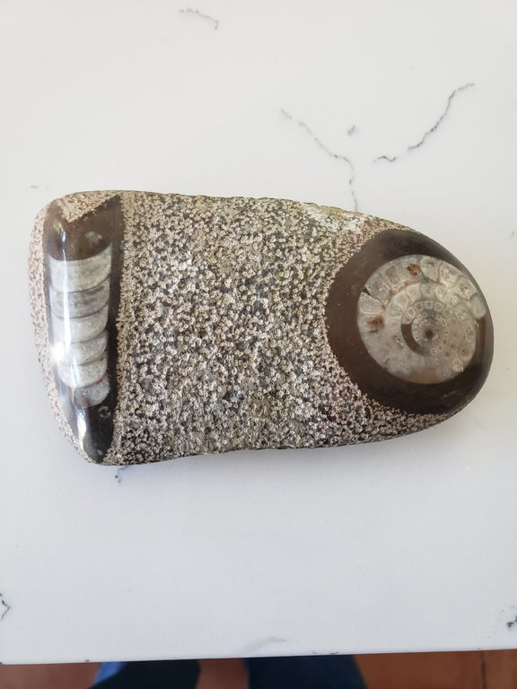 Polished Ammonite1.jpg