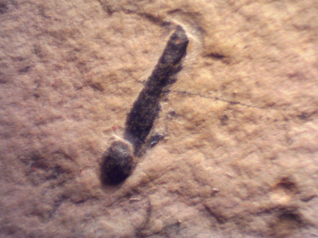 5d893023d1c3d_wheelersegworm-0004.thumb.png.45d3b6f03edd916e21872d04feb4cb98.png