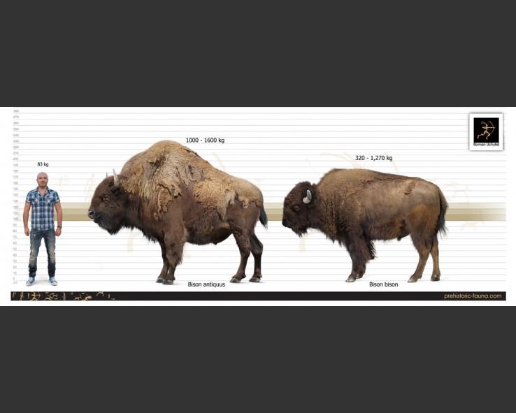 Bison-antiquus-size1-738x591.jpg