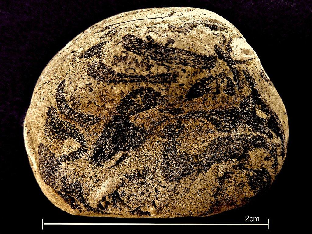5d9685cd6285d_Bryozoa(back)P1030022.thumb.JPG.13307f37bd54118038a219762f7874ab.JPG
