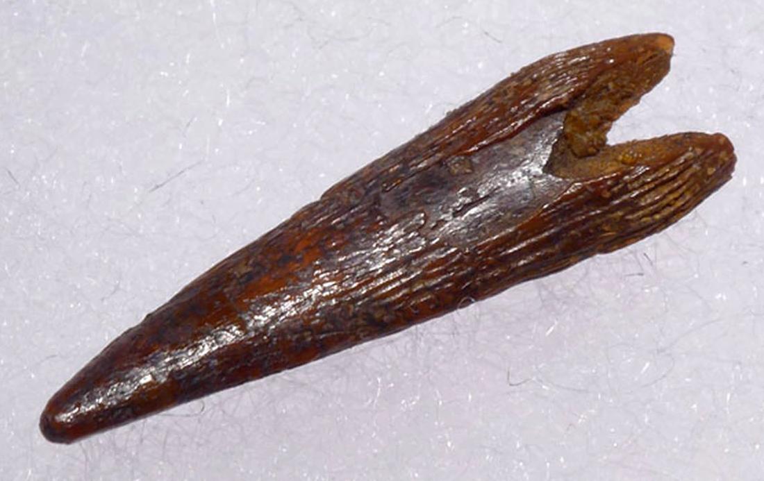 pterosaur 4.PNG