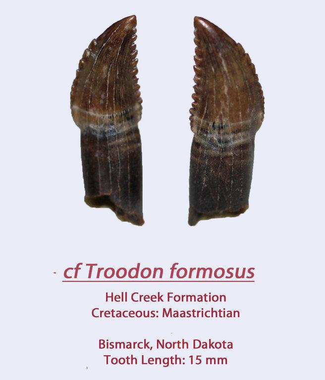 TroodonHC11a.thumb.jpg.8468320cbd0d6ae8c61e4c50a643224a.jpg