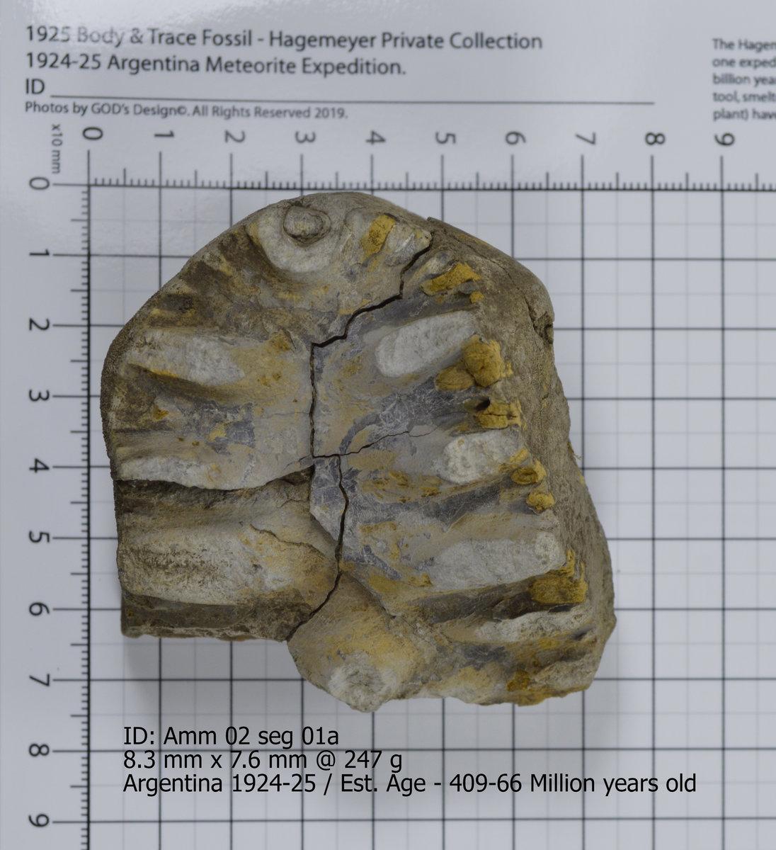 Ammonite 02 seg 01a.jpg