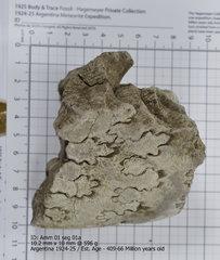 Ammonite 01 seg 01a.jpg