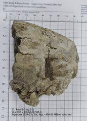 Ammonite 01 seg 01b.jpg