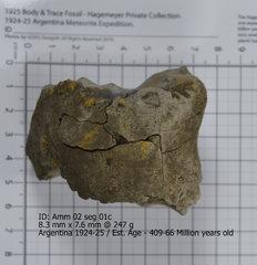 Ammonite 02 seg 01c.jpg