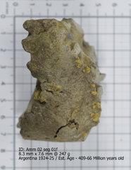 Ammonite 02 seg 01f.jpg
