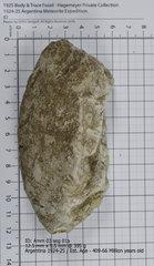 Ammonite 03 seg 01a.jpg