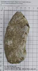 Ammonite 03 seg 01b.jpg