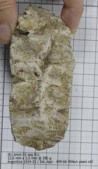 Ammonite 03 seg 01c.jpg