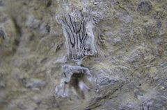 Tiny Crinoid Ossiclesand Worms 10.JPG
