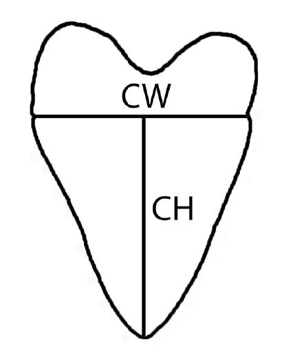 CW-CW.png