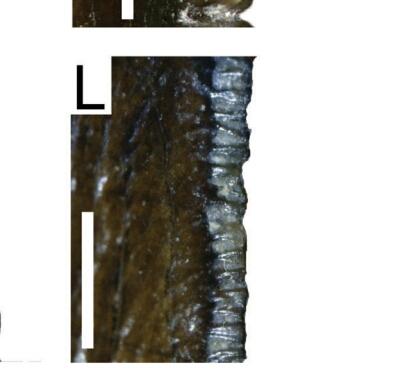Screenshot_2018-06-24-12-11-09.jpg.a569d4ced48115f73bf041c5a19621fd.jpg.ca28aab668a9e937f758baad61c5510f.jpg