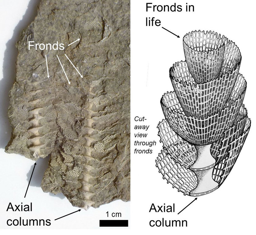 fossil-month-09-2018-Archimedes-in-life-2.jpg