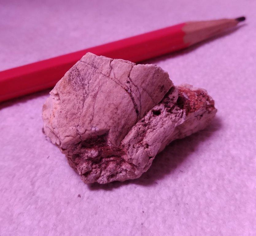 fossil dec2019 020.jpg
