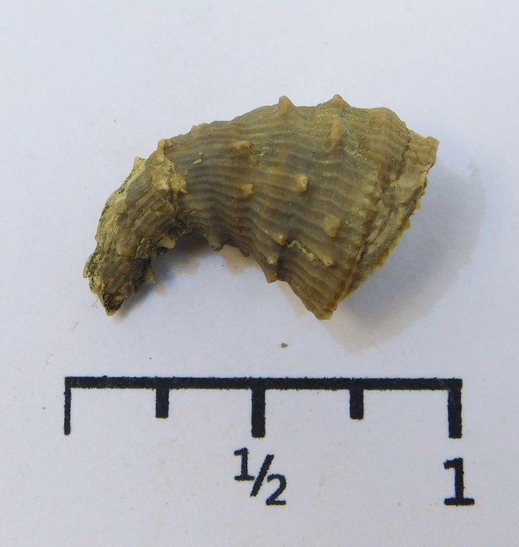 5e0f867233e16_CoralLophophyllidiumspinosum.thumb.JPG.4dda35e0459633e0eb19ca74c78cfd5d.JPG