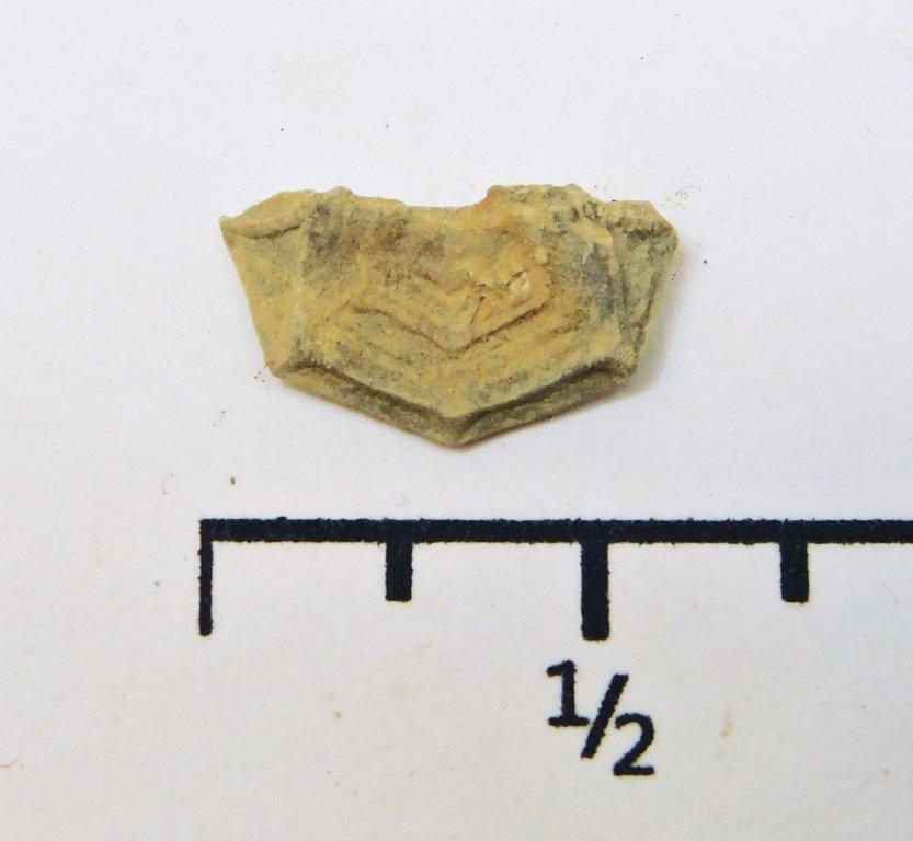 Crinoid.thumb.JPG.d10347b0c5c9606e92b3f10a662a70f9.JPG
