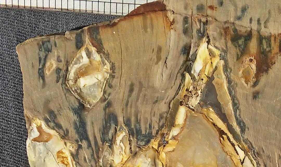 cypress closeup 1.jpg