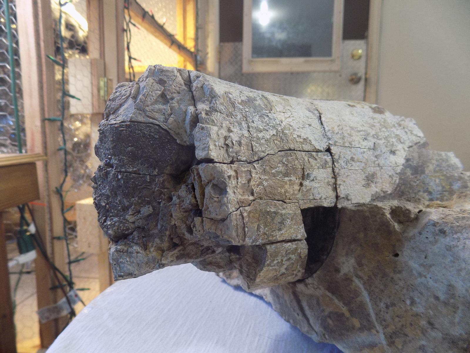 Possibly a femur bone in matrix