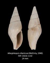 Macgintopsis chariessa