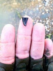 Tiny Mosasaur Tooth