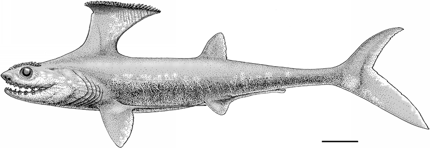 Akmonistion-zangerli-reconstruction-in-life-Extent-of-gill-covers-based-upon-branchial.png