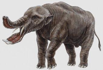 Platybelodon.jpg.1385666445f1965546bca4598c7d73e3.jpg