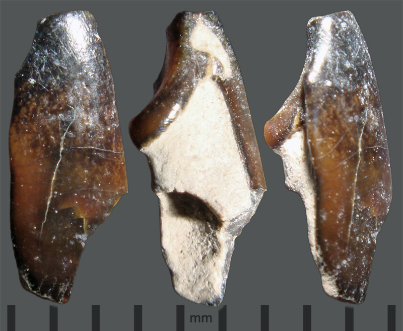 RC2-Brown-tooth.jpg.1f22593ca515766fdf0f3221a87a13f5.jpg