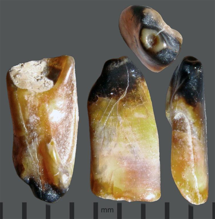 RC2-Yellow-tooth.thumb.jpg.b748f76fdf92fecdd5a96b0b1f707c15.jpg