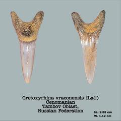 Cretoxyrhina vraconensis (La1)